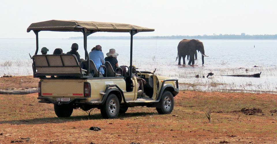 African elephant, Matusadona National Park, Zimbabwe
