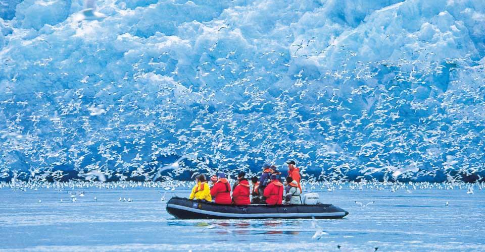 Kittiwakes swarm. Monaco Glaciers, Spitsbergen
