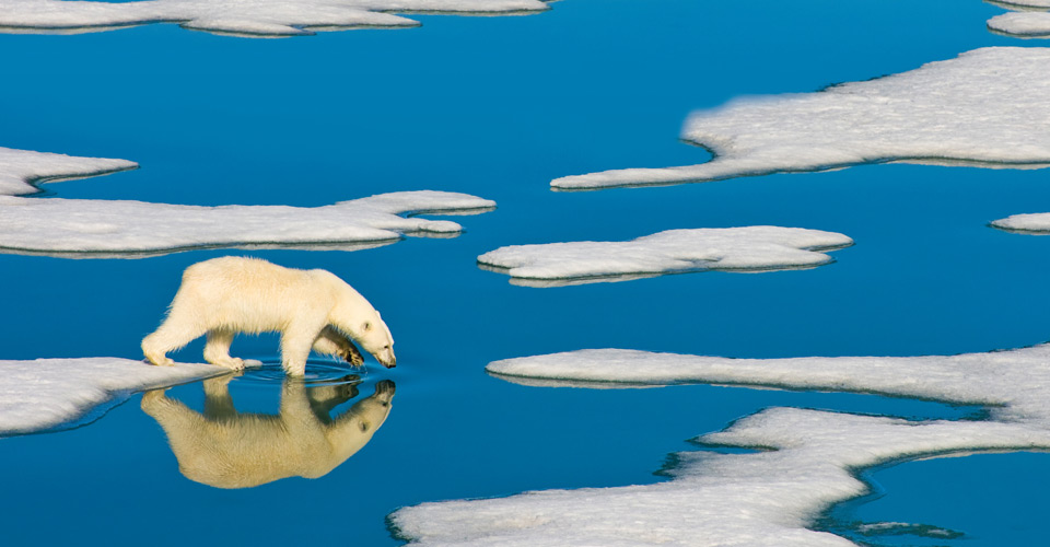 Polar bear, Svalbard Archipelago, Norway