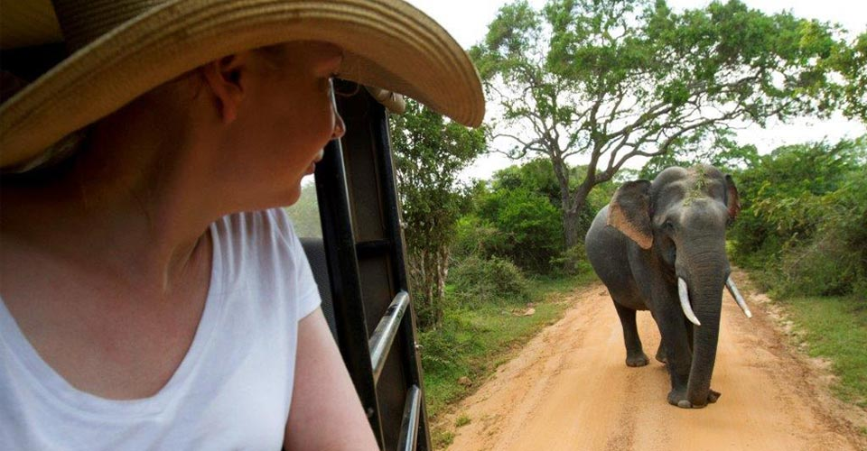 Asian elephant, Yala National Park, Sri Lanka