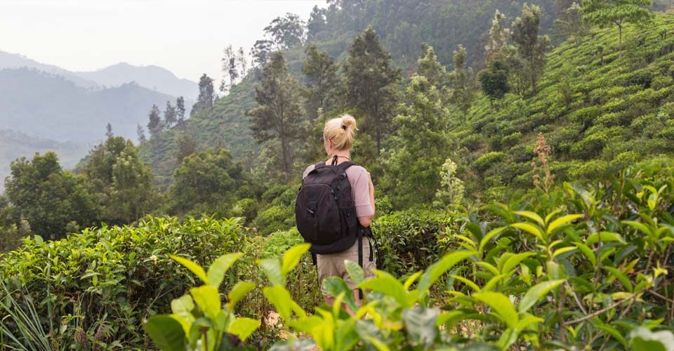 Tea plantation, Nuwara Eliya, Sri Lanka