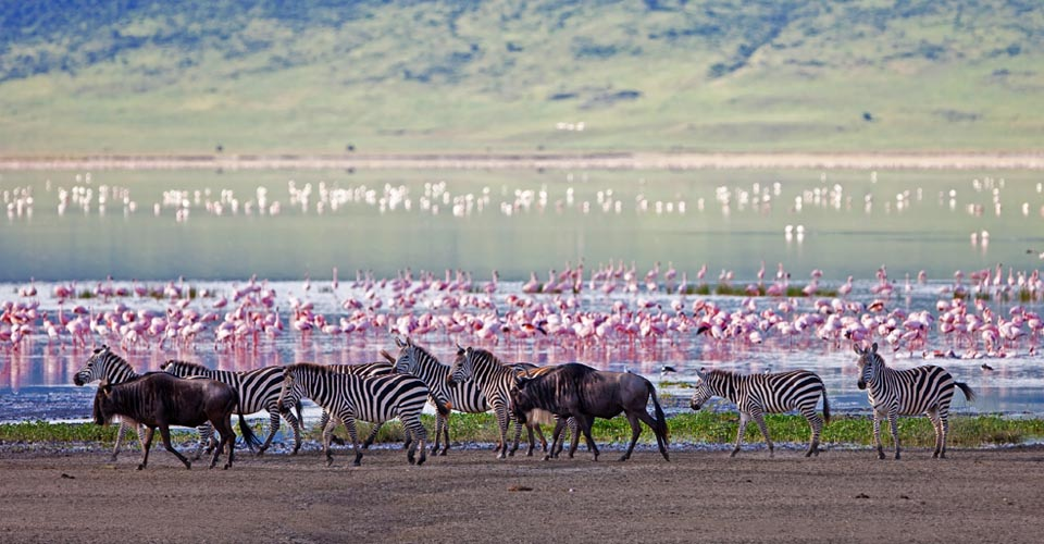 Lake Ndutu, Serengeti National Park, Tanzania