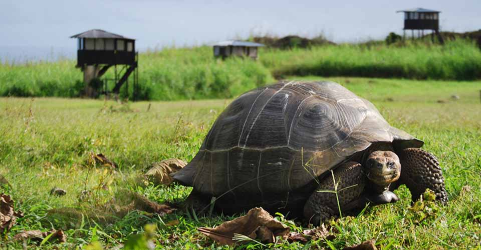 Giant tortoise, Santa Cruz, Galapagos Islands, Ecuador