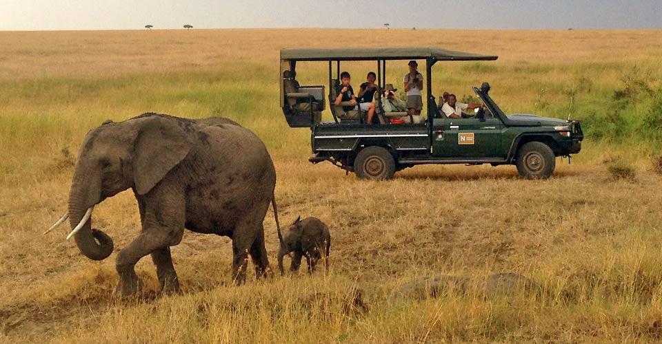 African elephant, Mara Conservancy, Kenya