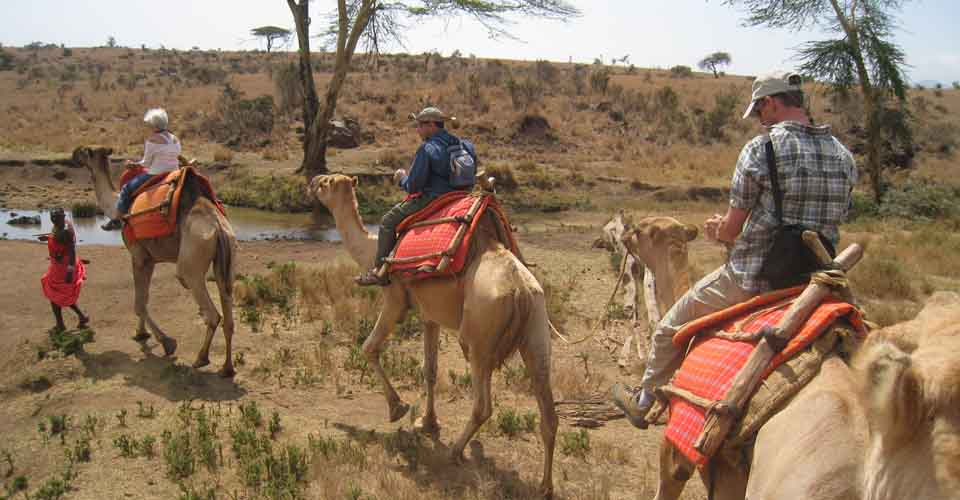 Camel safari, Lewa Private Conservancy, Kenya