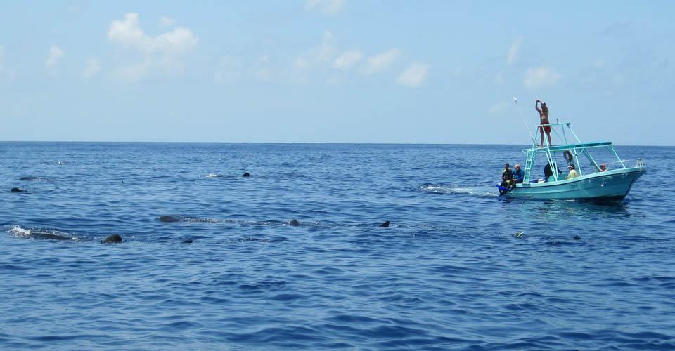 Whale sharks, Isla Holbox, Mexico