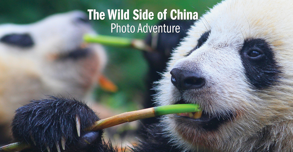 The Wild Side of China Photo Adventure