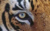 India's Tigers & Wildlife: A Photo Safari