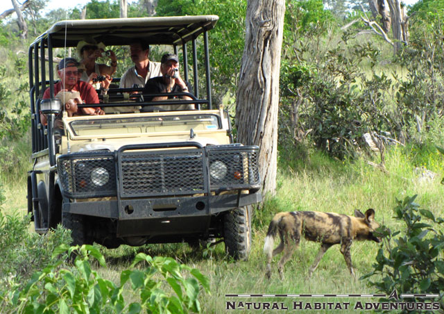 The classic Defender safari vehicle design is in the midst of a total overhaul by Land Rover. Project Icon will be launched in 2012, and I have requested some added cup holders which would be convenient while watching spotted wild dog.