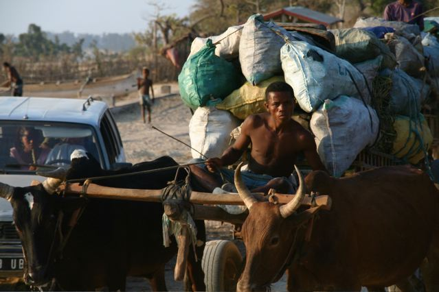 It is not uncommon to share the roads in the south with ox carts loaded with supplies for nearby markets.
