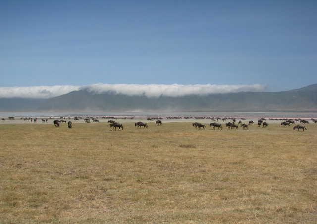 Ngorongoro Crater definitely lived up to its reputation for being stunning. Even the clouds hanging on the rim were incredible!