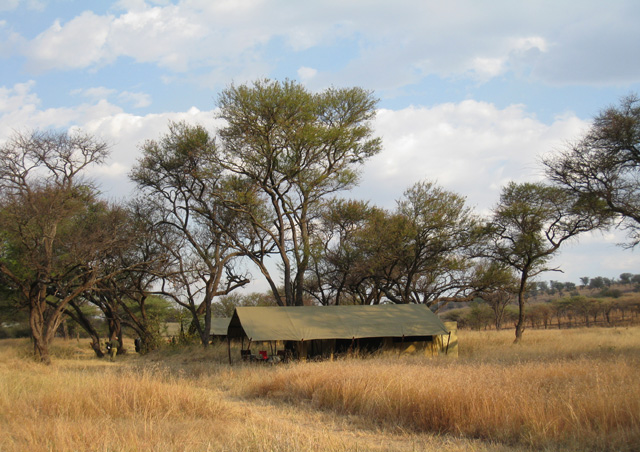 Here's our Serengeti Tented Camp. From the mobile tents we could look out over the grassy plains full of wildlife
