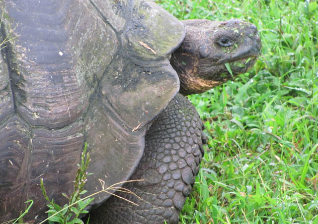 Galapagos Tortoise, one of the many highlights of that trip