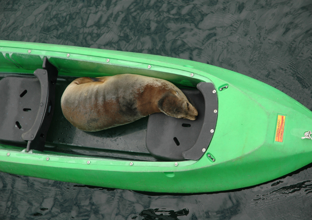 My kayak partner in the Galapagos was not much help with the paddling and was a bit on the stinky side.
