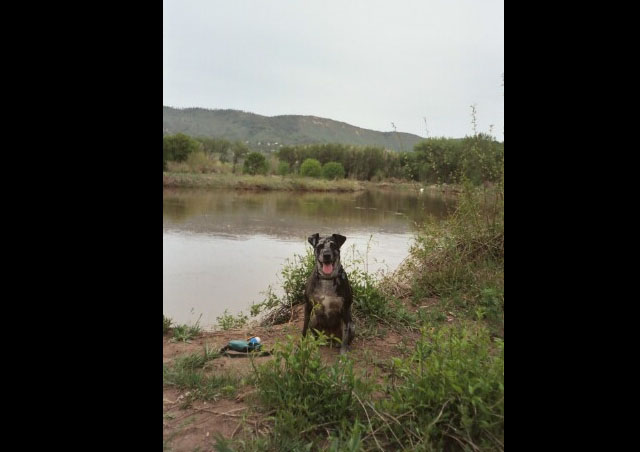 My Dog Nautique on a camping trip next to the Animus River in Durango Colorado.
