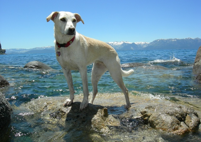 "Here is our ""dog,"" Quimby. Despite how this may look, she cannot swim, bark, or fetch for that matter."