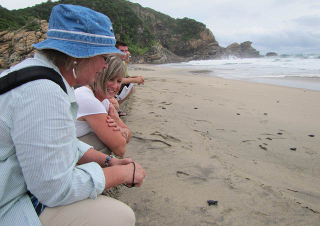 Helping the baby sea turtles make their way to the ocean - Huatulco, Mexico