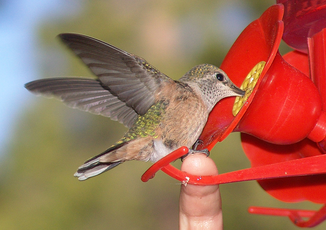 We like to camp and sometimes the hummingbirds at this campsite would land on our fingers.