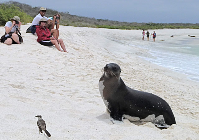 "…and now one last photo with the Mockingbird, Sea Lion, and Homo Sapiens. Look at the water bottle and say ""Perfect""."