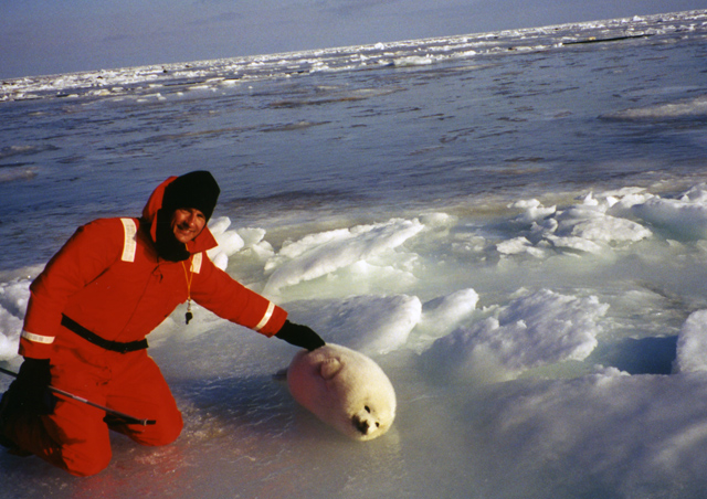 I started with Natural Habitat Adventures in 1999, as an assistant guide for our Harp Seal Expedition to the Gulf of St. Lawrence in Canada. The sensation of stepping out of the helicopter onto a frozen ice floe, and hearing nothing but the wind and the bleating sounds of those baby seals was really an unforgettable experience. I was hooked!