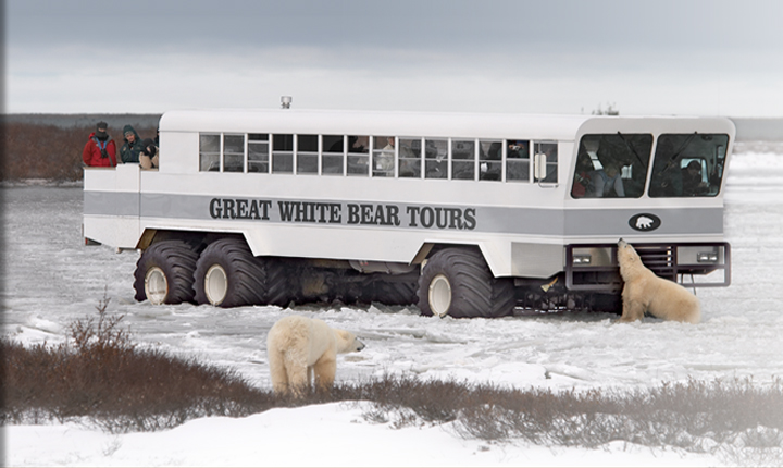 Polar Bears and Polar Rover